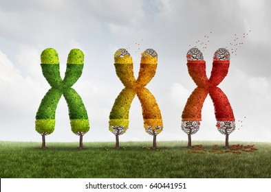 Telomere length loss health concept with DNA and shortening telomeres medical idea as a green tree declining with falling red leaves on the end caps of a chromosome with 3D illustration elements.