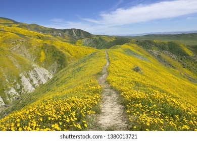 Tember Range in Spring, Carrizo Plain National Monument, CA