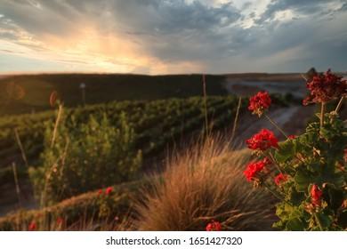 La campagne de Temecula, en Californie, est un magnifique paysage au coucher du soleil.  C'est une destination de voyage populaire au milieu du pays viticole.