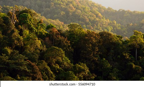 Temperate forest canopy