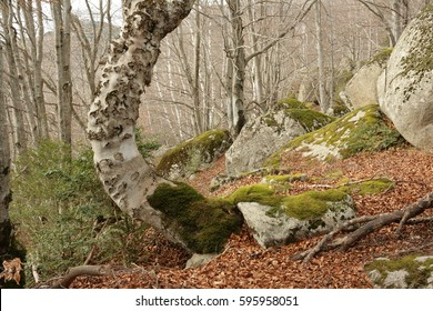 Temperate forest in France