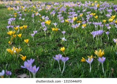 The temperature soars and the first flowers begin to bloom in the Netherlands as a sign of early spring.
