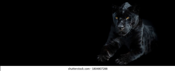 Template of a black panther with a black background