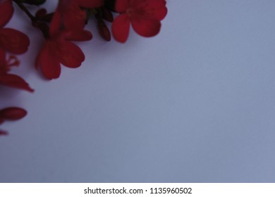 Template of grey background with red flowers