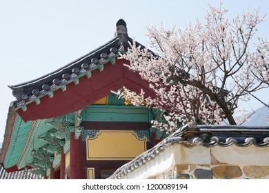 A temple with apricot tree, Tongdosa temple, South Korea