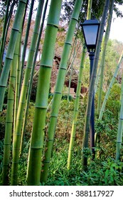 Temple in the Bamboo Forest