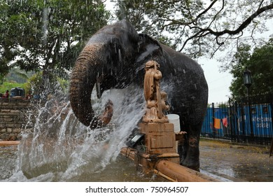Temple Elephant of Kandy in Sri Lanka
