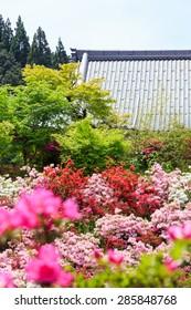 Temple roof beyond a field of flowers of Japanese Azalea