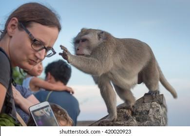 Temple Uluwatu,Bali island,Indonsia - May 07,2016 : monkey thief steals points from tourists