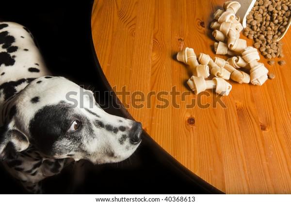 temptation-dog-his-food-600w-40368613.jp