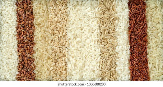 Ten different varieties of rice are placed in rows. The texture of grains of rice of different colors.
