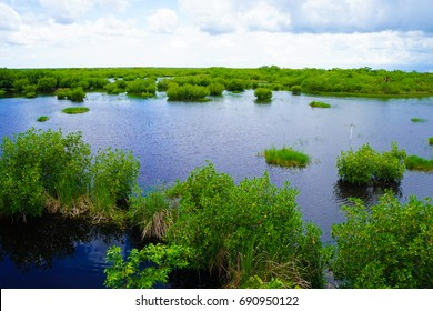 Ten Thousand Islands National Park in Florida Everglades