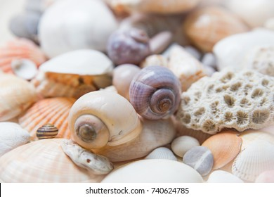 Tender background with seashells.