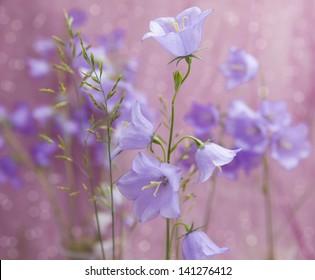 tender bluebells flowers grow in the grass