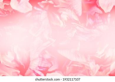 Tender flowers as background. Floral card design