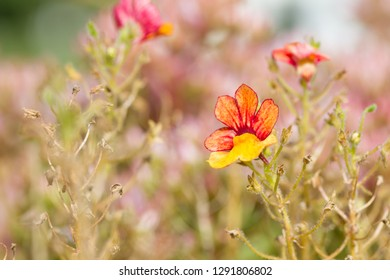 tender flowers in yellow and orange