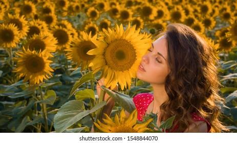 Tender girl in bright golden sunflowers at sunset.