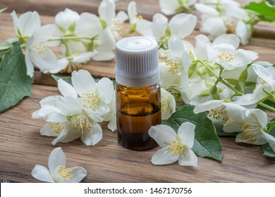 Tender jasmine flowers and jasmine oil isolated on wooden background.
