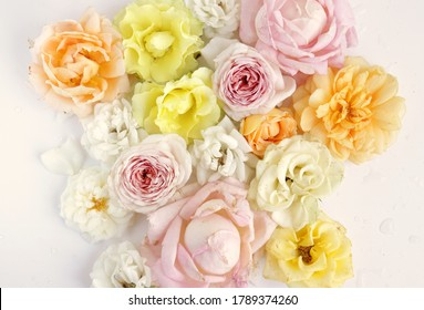 Tender pastel roses in bloom flat lay photo. Floral background wallpaper. Different flower heads on white background commercial photo