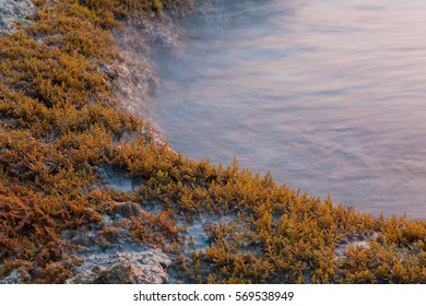 Tender sea shore with grass during sunrise