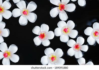 Tender temple-tree flowers on water