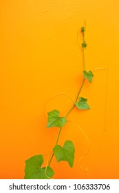 tendril on yellow background