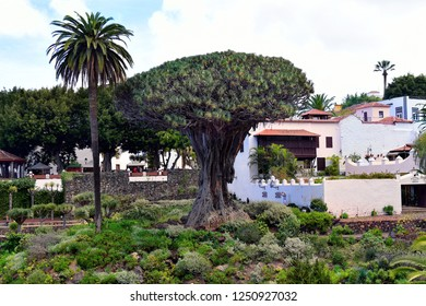 TENERIFE, CANARY ISLAND, SPAI - APRIL 04: Unidentified tourists and the old dragon tree situated in Icod de los Vinos village, on April 04, 2018 in Tenerife, Spain
