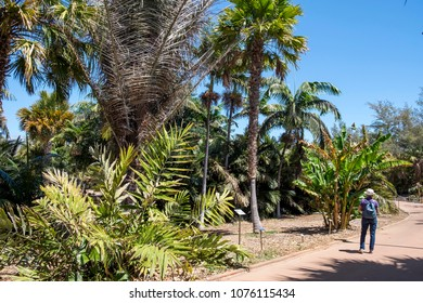 Tenerife, Canary islands - april 05, 2018: Tourist with backpack, walking among the Palmetum gardens of Santa Cruz