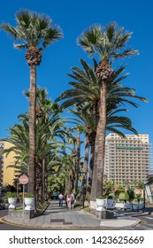Tenerife, Canary islands - april 22, 2019: Palm walk of Aguilar and Quesada in the center of the tourist city of Puerto de la Cruz, north of the island