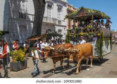 Tenerife, Canary islands - july 12, 2009: People with typical costumes on a cart pulled by oxen through the streets of La Laguna during the pilgrimage of San Benito Abad