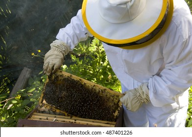 TENERIFE, CANARY ISLANDS - MARCH 29, 2010: A beekeeper , takes one of the panels of a beehive