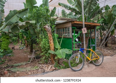 Tenerife, Canary islands - October 15, 2018: Scene with bicycle and tool room inside an ecological plantation in the south of the island