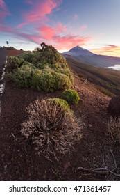 Tenerife - canary islands - spain