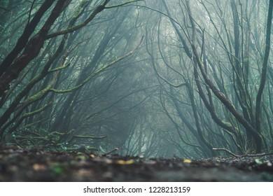 Tenerife laurel forest, Anaga Rural Park