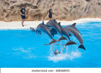 Tenerife, Spain - march 13, 2017: Jumping dolphins at dolphin show at Loro Parque in Tenerife, Spain.