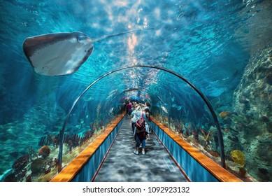 Tenerife, Spain - May 4, 2018: Aquatic tunnel in the Loro parque aquarium on may 4, 2018 in Tenerife, Spain.