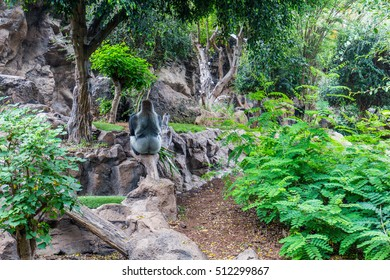 Tenerife, Spain - September 14, 2016: Gorilla siting on a stone in a Tenerife Loro zoo park