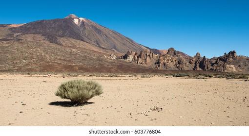 Tenerife, Teide National Park, Canary Island, Spain