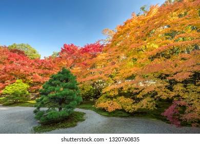 Tenjyuan temple in autumn, Kyoto, Japan