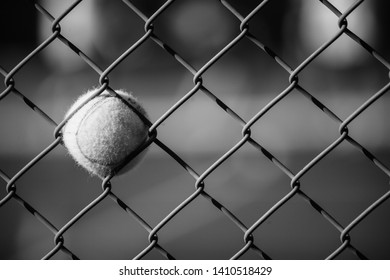 A Tennis Ball Stuck in a Fence