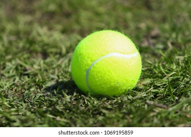 Tennis ball that is on the green grass