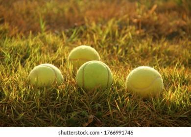Tennis balls lying in the grass closeup