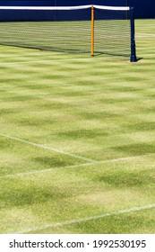 Tennis net on grass court in sunshine