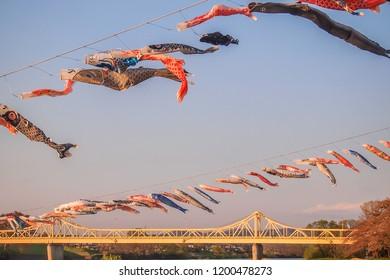 Tenshochi Park,Kitakami,Iwate,Tohoku,Japan on April 26,2018:Carp streamers (or koinobori) over the Kitakami River blowing in strong wind,with Sangobashi Bridge in the distance.