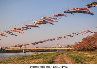 Tenshochi Park,Kitakami,Iwate,Tohoku,Japan on April 26,2018:Carp streamers (or koinobori) over the Kitakami River blowing in strong wind,with Sangobashi Bridge in the distance.