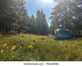 A tent campsite in the meadow.