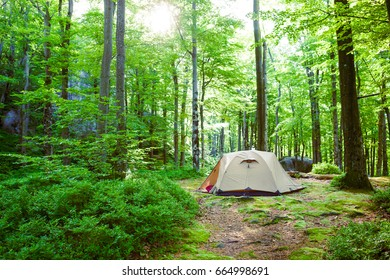 Tent in the deciduous forest. Outdoor recreation on a day off.