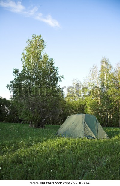 Tent in the forest in sunny summer day