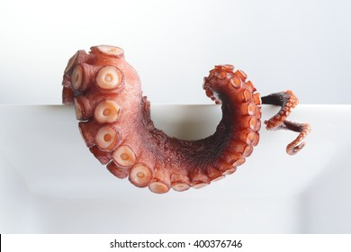 Tentacles of octopus