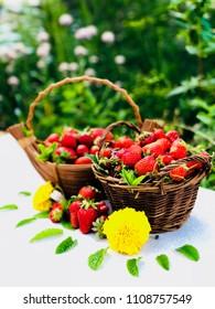Teo baskets of fresh strawberries in the garden